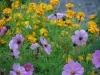 oktobergarten_anemonen