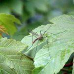 Mittel gegen Stechmücken