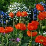 Blumen_Farbe