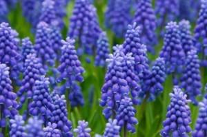 Blumen_b1