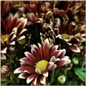 Blumen_br1
