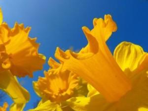 Blumen_g1