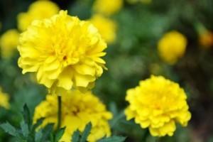 Blumen_g2