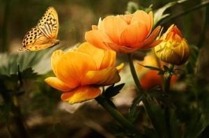 Blume_o1