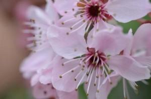 Blumen_pa1