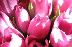 Blumen_ro1