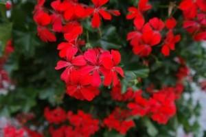 Blumen_r2