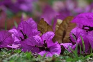 Blumen_v2