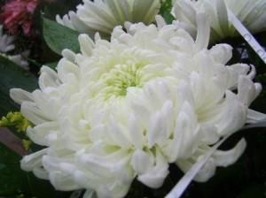 Blumen_w1