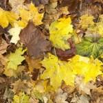 Novembergarten_Laub1