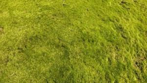Grasfläche