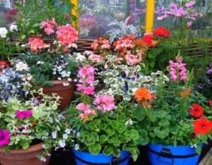Topfpflanzen wollen raus