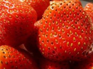 Eine Sammelnussfrucht