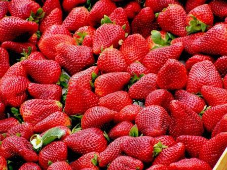 Berühmt Erdbeer-Special – Alles über Erdbeeren im eigenen Garten #LN_35