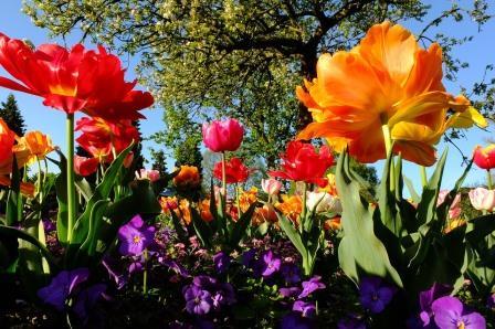 Blumen in ganzer Pracht