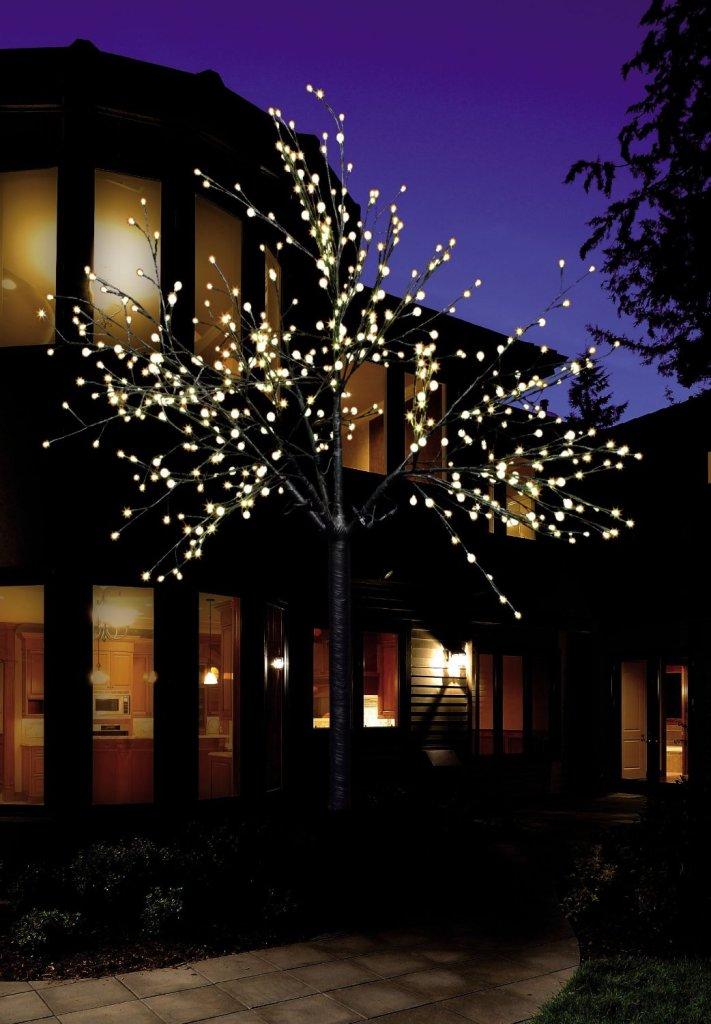 Wenn Im Garten Der Lichterbaum Brennt? | Garten Pflanzen Baum Fur Den Garten Outdoor Bereich Perfekt Geeignet
