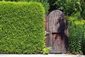 hecken und fertig-hecken als sichtschutz | garten pflanzen, Best garten ideen