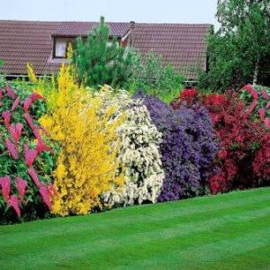 gartenpflanzen immergrun – rekem, Garten Ideen