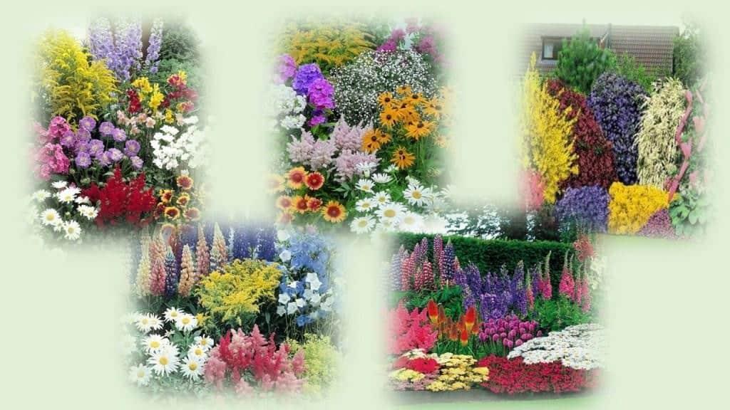 design#5001333: mondkalender017 garten tipps – gartengerate ideen, Garten und erstellen