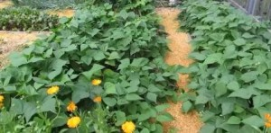 Ein Lasagne-Garten sieht gut aus