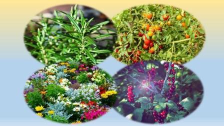 Der Lasagne-Garten - Obst, Gemüse, Blumen