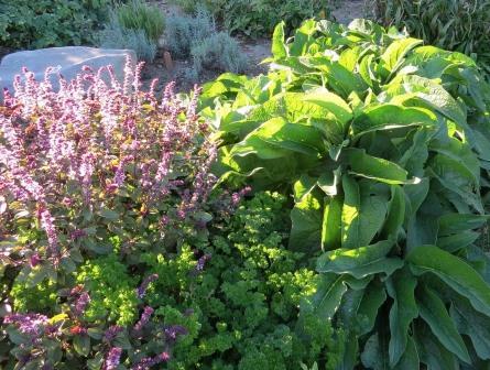 kr uter ernten und schneiden so geht es garten pflanzen. Black Bedroom Furniture Sets. Home Design Ideas