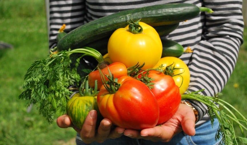 Gemüse Ertrag