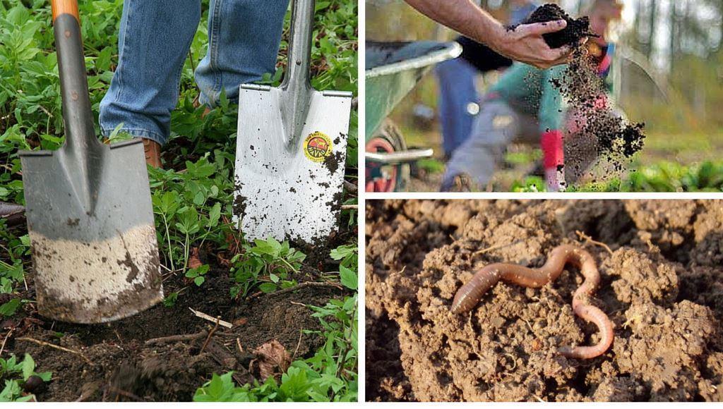 Bodenarten und Bodenverbesserung