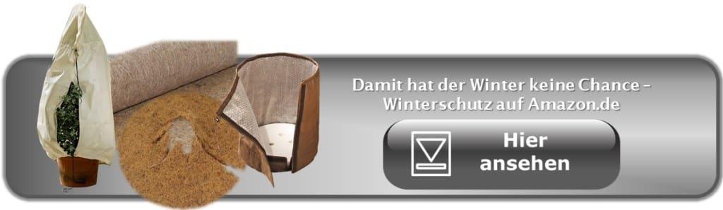 k belpflanzen drinnen oder drau en garten pflanzen. Black Bedroom Furniture Sets. Home Design Ideas