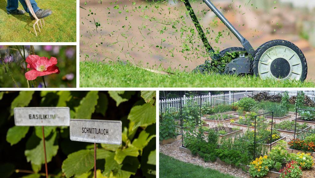 Rasen und Pflanzen