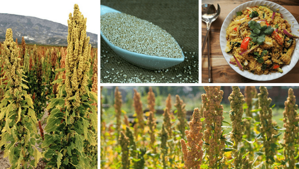 Quinoa Superfood
