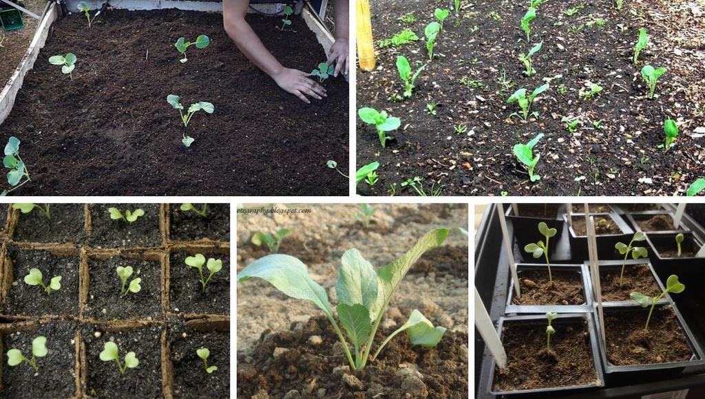 Aussaat und Auspflanzen