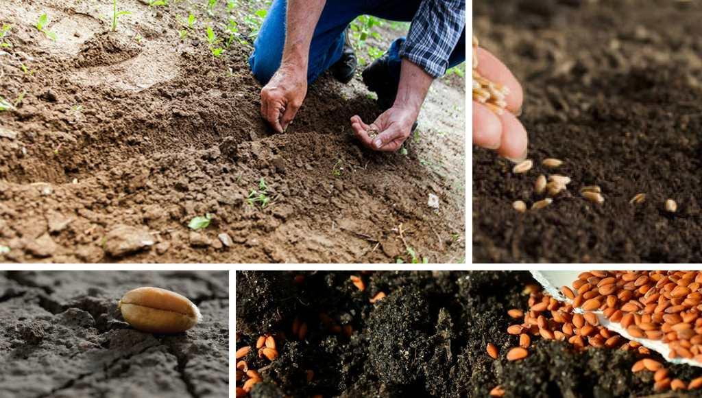 Zimt und Samen